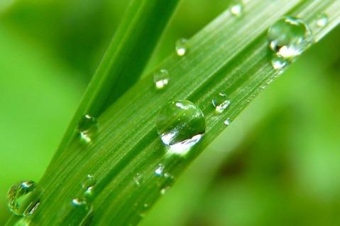 grass green, grun, English meaning