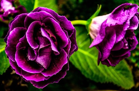 purple meaning English