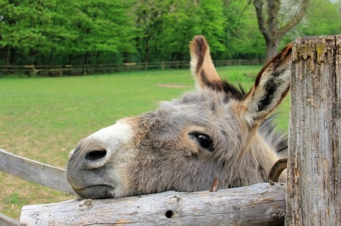 donkey's years, learn English, English phrases
